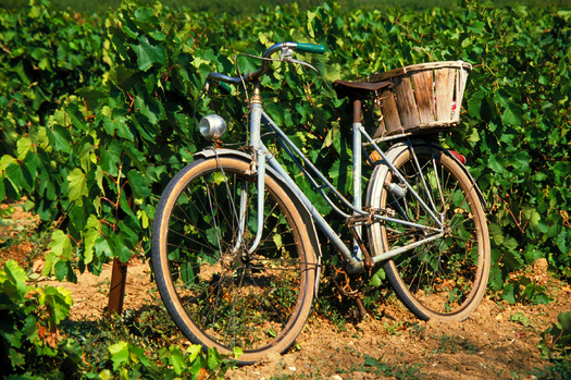 bicycle-vineyard-tour-1.jpg
